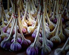 Farmers Market Garlic - St Paul, MN (j-rye) Tags: lkg sonyalpha sonya6000 sony a6000 ilce6000 mirrorless garlic farmersmarket produce plant vegetable
