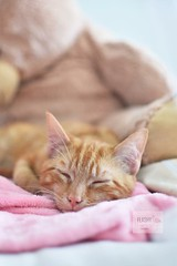 Kitten! #bed# #cat #kitten #snowing #whitesnow #pet #petphotography #cute #portraits #pets #cats #ginger #colours #outdoors #nature #cold #like #follow #35mm #garden# #baby #meow #pink# #kitten# #animals (Flashy Flamingo Photography) Tags: bed garden pink kitten cat snowing whitesnow pet petphotography cute portraits pets cats ginger colours outdoors nature cold like follow 35mm baby meow animals