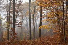 L'automne dans les bois (Excalibur67) Tags: nikon d750 sigma globalvision arbres art trees forest foréts automne autumn brume mist paysage landscape nature 24105f4dgoshsma