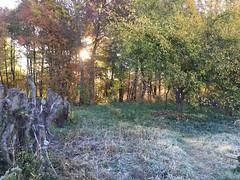 (genekorol) Tags: frost appletree forest autumn sunrise