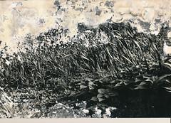 00000000_IMG_0012 (NAMARA EXPRESS) Tags: exhibition photostreet photoexhibition photograph print paper memorial old typhoons storm surge monochrome blackandwhite japan film trix plusx canon canoscan 9000f scanner scan namaraexp
