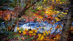 Autumn by a Brook (photo fiddler) Tags: ingramport novascotia brook fall leaves hikingtrail october 2018