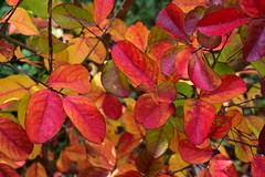 DSC_5171 (griecocathy) Tags: macro arbre feuille branches rouge jaune vert oranger gris marron