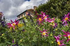 Monet's Clos Normand (Alida's Photos) Tags: monet garden flowers dahlias pink closnormand giverny france europe