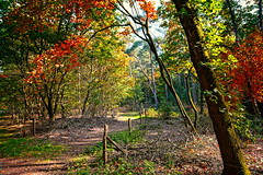 Along The Fence (Alfred Grupstra) Tags: autumn leaf tree nature yellow forest season outdoors orangecolor red october goldcolored multicolored landscape parkmanmadespace woodland scenics beautyinnature branch vibrantcolor