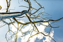 Roxy Paine (Thomas Hawk) Tags: america forestpark missouri mo museum roxypaine saintlouisartmuseum stlouis usa unitedstates unitedstatesofamerica artmuseum sculpture tree trees fav10 fav25 fav50