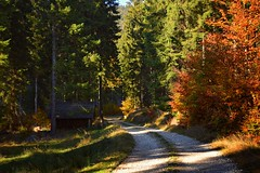 colours of the autumn (JoannaRB2009) Tags: nowamorawa lowersilesia dolnyśląsk polska poland nature forest woods path road tree beech yellow golden green light sunlight hut shed sudety valley mountains autumn fall landscape view