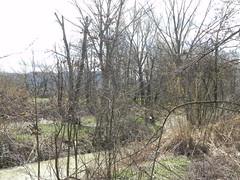DSCN9817 (Gianluigi Roda / Photographer) Tags: springtime march 2013 creek creeks lavinocreek