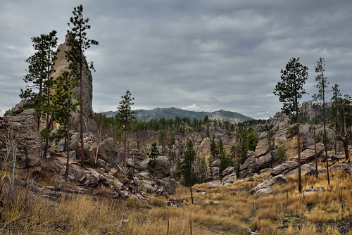 Adding Prairie Grass and Pine Evergreens to a Landscape of Eroded Granite Towers and Spires (Custer State Park)