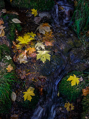 Fall Stream in Yosemite Valley (Jeffrey Sullivan) Tags: national park fall colors photography workshop yosemitenationalpark yosemitevalley yosemitevillage mariposacounty california usa nature landscape travel night photographer canon eos 5d mark iv photo copyright 2018 jeff sullivan october yosemite colorful autumn leaves still life