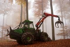 Monster (Lothbrok'sYen) Tags: monster forest november woods lothbroksyen