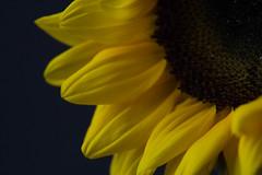 IMG_2675.jpg (KanayaS) Tags: lighting
