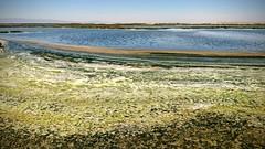 Layers of Stuff (tourtrophy) Tags: donedwardssanfranciscobaynationalwildliferefuge alviso mudslough marshland googlephotos googlepixel2xl