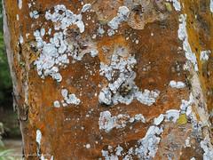 Textures. (natureflower) Tags: bark textures tree trunk fungus