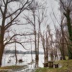 Acqua alta on the Rhône...           _DSC0383 thumbnail