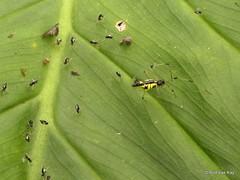 Spider with offspring (Ecuador Megadiverso) Tags: andreaskay arachnida ecuador mindo nest spider