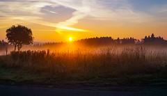herbstlicher Sonnenaufgang (A.K. 90) Tags: nature landscape natur landschaft light sun sonne sunshine sonnenschein sonnenaufgang sunrise cloudssunsetsstormssunrise fog nebel tree baum plants pflanzen redyelloworange morning morgen herbst autumn sonyalpha6000 e18135mmf3556oss