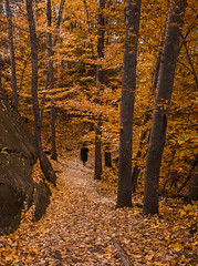 Autumn Hikes are the best (ravi_pardesi) Tags: autumn hikes north america algonquin lookout trails northern lady orange red yellow fall leaves ontario discoveron canada canadian provincial park