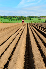 20160517-800_3641 (geoff409) Tags: 2017 crop dirt farm harvesting landscape sowing spring straight agricultural agriculture agronomy country countryside crops cultivation equipment farmer farming farmland field forfar furrow green growth harvest industry land machine machinery pattern plant planting plowed potato potatoplanting row rural soil summer tractor