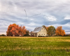 Fall (Christopher A Mills Photography) Tags: sky farm thecounty country beautiful birds trees clouds barn fall explore maine
