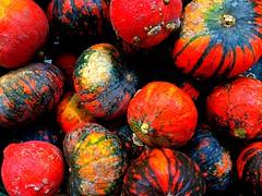 Pumpkins in autumn colors | Czech Republic (maryduniants) Tags: autumncolors vivid colors orange red food czechrepublic prague fall autumn pumpkin october