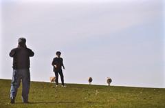 Among the sheep (pedrik) Tags: aberystwyth wales uk ceredigion sheep grass digitizedbyslr prakticamtl5b kodakkodachrome64 gimp gmic fotoxx 52422018 film