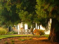 Blick zur Abendsonnen-Terrasse (Jörg Paul Kaspari) Tags: parkgarten herbst autumn fall metasequoia mammutbaum farn fern polystichum munitum polystichummunitum kalifornischer schwertfarn