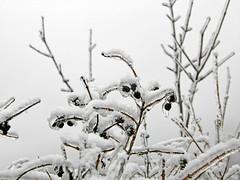 98435068 (aniaerm) Tags: snow ice frost