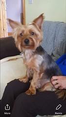 Mon, Oct 22nd, 2018 Lost Male Dog - Glenn Brendan's Road, Lisdoonvarna, Clare (Lost and Found Pets Ireland) Tags: lostdogglennbrendan'sroadclare lost dog glenn brendan's road clare october 2018