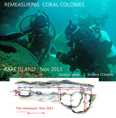 2013 - NSW, Bare Isand - Corals Measure