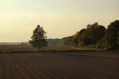 *** (pszcz9) Tags: pole field drzewo tree zachódsłońca sunset pejzaż landscape jesień autumn parkkrajobrazowy landscapepark dolinabaryczy beautifulearth sony a77 przyroda nature natura naturaleza