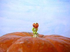 73-pumpkin-1 12mm (1) (tinyteensdolls) Tags: amigurumi amigurumidoll artdoll crochet craft crochetmini crochettoy crochetminiature crochetdoll toy tiny tinyamigurumi threadcrochet teddy miniature mini microcrochet micro minicrochet miniamigurumi pumpkin pumpkinhead handmade halloween