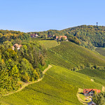 Vineyards in Slovenia thumbnail
