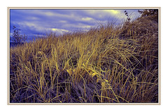 Dune Grass in infrared at Port Crescent, Michigan (TAC.Photography) Tags: infrared dunegrass portcrescentstatepark michiganstatepark framedphoto shoreline d7000