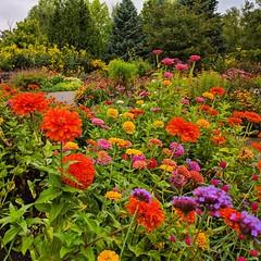 colorful garden (ekelly80) Tags: michigan annarbor summer august2018 gardens botanicgardens universityofmichigan matthaeibotanicalgardens flowers colors green