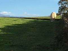 Photo of Beware of the Bull ...