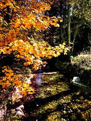 Goldener Oktober am Langenbach (MHikeBike) Tags: wald berge wasser bäume nationalpark schwarzwald nordschwarzwald murg murgtal baiersbronn huzenbach schönmünzach wandern wege ruhe berg radweg fahrrad weg