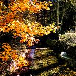 Goldener Oktober am Langenbach thumbnail