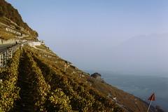 abrupt (Marco - MB Photography) Tags: lavauxpanorama lavauxunescowhs lavauxvineyards unescoworldheritagesite autumncolours fallcolors swissbeauty lacleman alps alpes alpi leicam