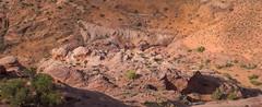 Top-down Atlantis (Chief Bwana) Tags: ut utah slotcanyon vermilioncliffs navajosandstone pariaplateau panorama thethumb atlantis psa104 chiefbwana