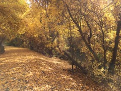 IMG_2795 (August Benjamin) Tags: provo provoriver provorivertrail fall utah mountains provocanyon fallcolors autumn trees leaves orem utahvalley jogging