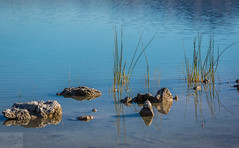 Reeds and Rocks (Wycpl) Tags: crystalspringsreservoir jcpphotography reflection lake reeds rocks