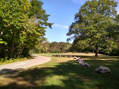 Townsend Park (neukomment) Tags: parks michigan usa outdoors autumn september 2018 hdr android