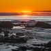 Papaya Sunset