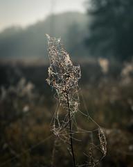 Bosch (26 of 32) (VarsAbove) Tags: kampinos kpn kampinoski park narodowy fog mist mgła morning sunrise dawn wschód polska poland łoś moose sony sonya7 a7ii coffe milkyway
