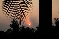 sunset (Arnab Bala) Tags: sunset cloud tree