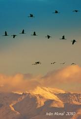 Gredos (ivánmoral) Tags: sierra gredos grullas cormoran nieve montañas amanecer