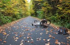 Fallen leaves... fallen bicycle! (Shu-Sin) Tags: velo shusin bicycle bike bags randonneur randonneuse rando tour touring road path fall autumn leaves fallen green yellow gilles berthoud 650b canada quebec travel colors