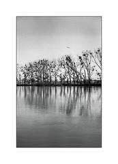 Conflans Sainte Honorine (Punkrocker*) Tags: leica iiif ltm leitz elmar 5cm 5035 redscale film fuji neopan acros 100 nb bwfp river harbor seine conflanssaintehonorine yvelines france trees