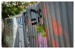 just peeping (pintzu) Tags: bucharest